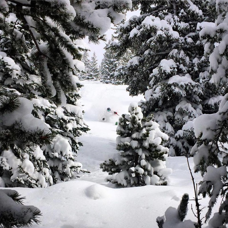 Brittany Walker Konsella skiing powder in the Monarch Pass backcountry.