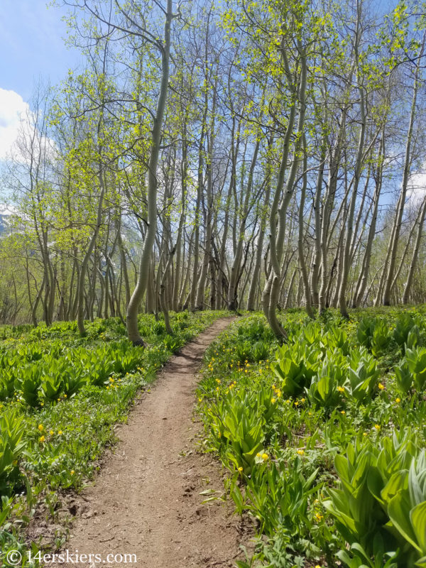 Snodgrass Trail - Early Season Hikes near Crested Butte